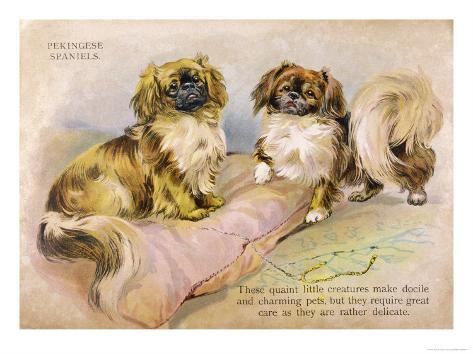 Two Pekingese Dogs and a Pink Cushion Giclee Print
