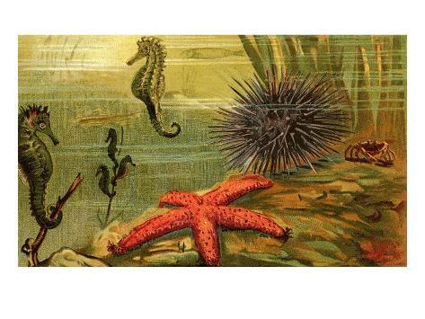 Underwater Scene with Starfish and Seahorses Art Print