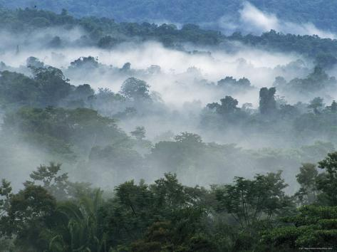 Rain Forest, from Lubaantun to Maya Mountains, Belize, Central America Photographic Print