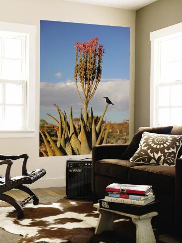 Blooming Aloe Littoralis Wall Mural