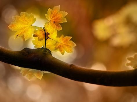 In Autumn 2 Photographic Print