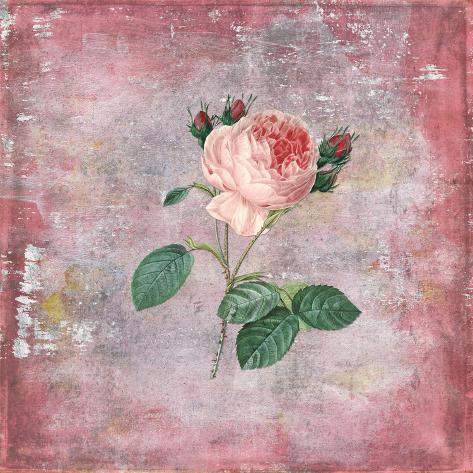 Wonderful Historical English Rose On Coarse Silver