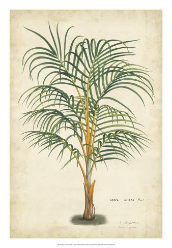 Palm of the Tropics III Giclee Print
