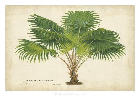Palm of the Tropics V Giclee Print