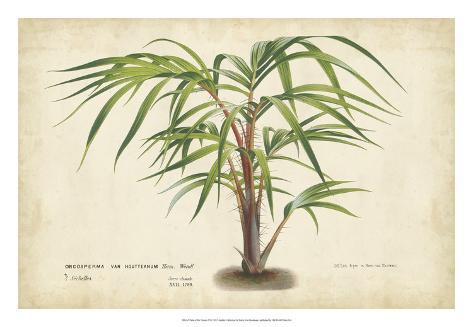 Palm of the Tropics VI Giclee Print