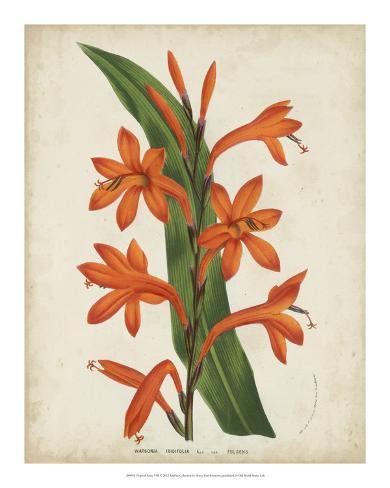Tropical Array VIII Giclee Print