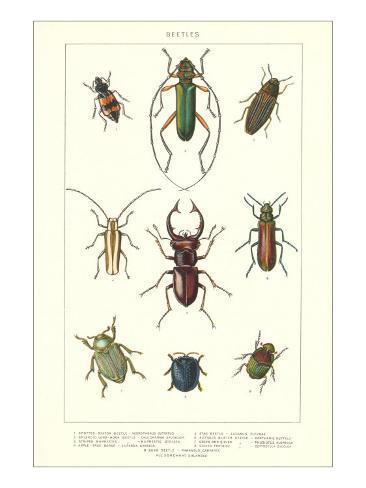 Various Kinds of Beetles Art Print