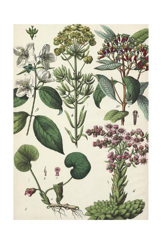 Various Plants with Flowers in Clustered Configurations Art Print