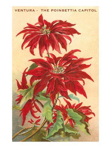 Ventura, the Poinsettia Capital Art Print