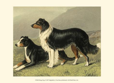 Sheep Dogs Art Print