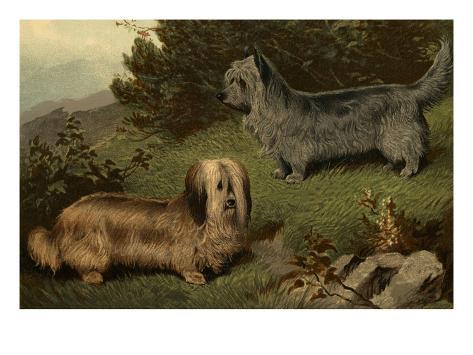 Skye Terriers Art Print