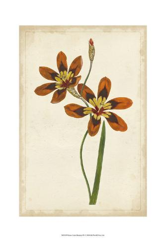 Vibrant Curtis Botanicals IV Art Print