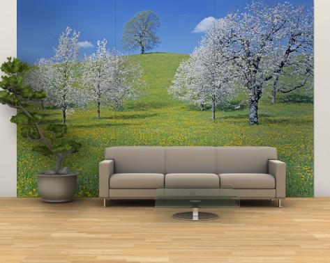 View of Blossoms on Cherry Trees, Zug, Switzerland Wall Mural – Large