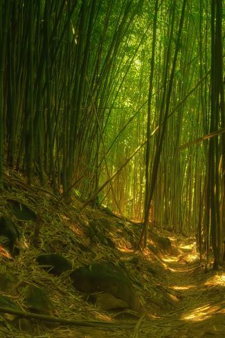 Bamboo Forest, Maui Photographic Print