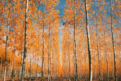 Trees of Mystery, Forest in Autumn, Northern Oregon Seinämaalaus