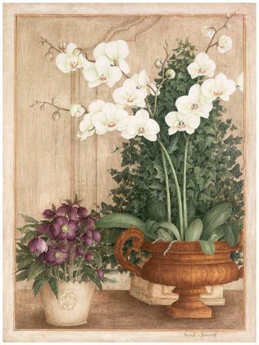 Grande Orchidée I Art Print