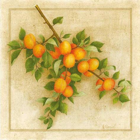 Abricots de Nancy Art Print