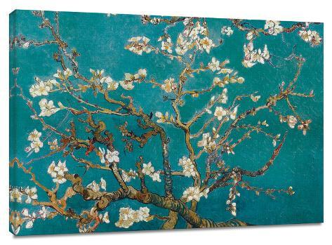 Almond Blossom Stretched Canvas Print