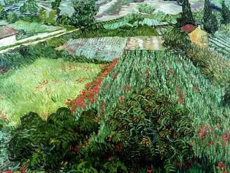 Field of Poppies, Saint-Remy, c.1889 Gicléetryck