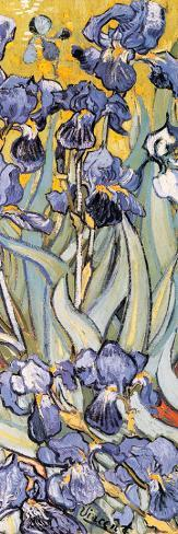 Irises, Saint-Remy, c.1889 (detail) Stretched Canvas Print