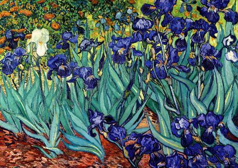 Irises, Saint-Remy, c.1889 Framed Art Print