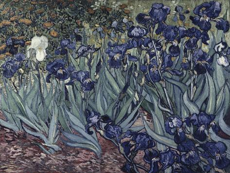 Irises Giclee Print