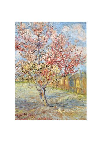 Peach Tree in Bloom at Arles, c.1888 Giclee Print