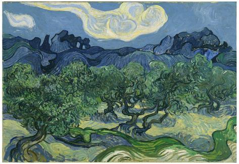 Vincent Van Gogh (The Olive Trees) Art Poster Print Poster
