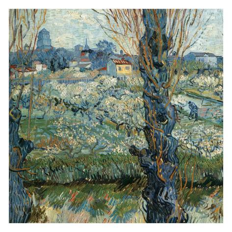 Vue D'Arles Avec Vergers En Fleurs Art Print
