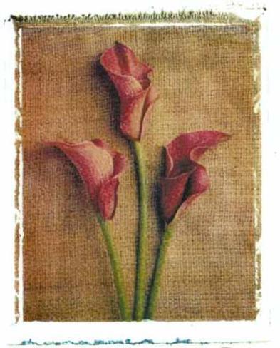 Callas Framed Art Print