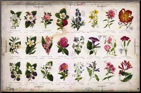 Vintage Botanical Mounted Print