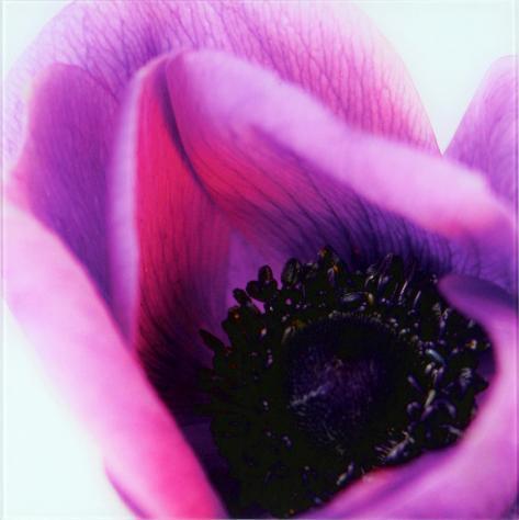 Violets II Art on Glass