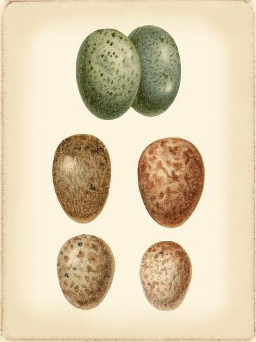 Bird Egg Study V Art Print