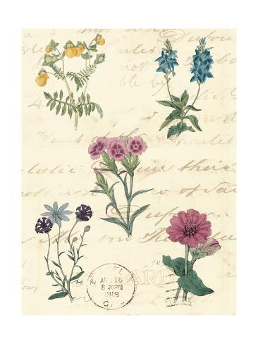 Botanical Journal III Art Print