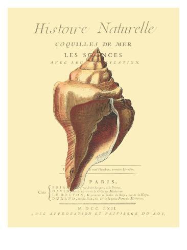 Coquilles De Mer II Art Print