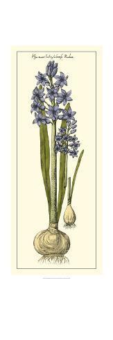 Embellished Hyacinth II Art Print