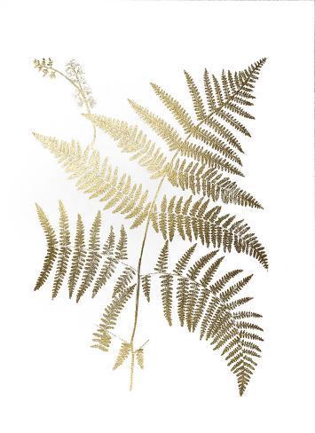 Gold Foil Ferns I Art Print