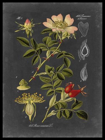 Midnight Botanical I Art Print