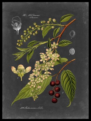 Midnight Botanical II Premium Giclee Print
