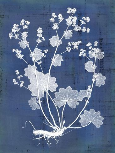 Nature's Imprint I Art Print