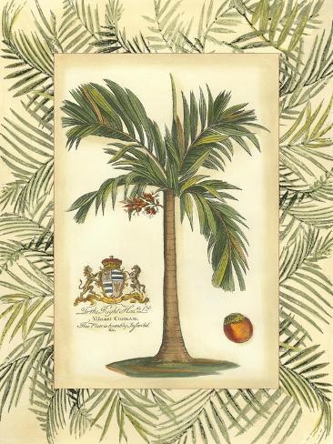 Palm in Bamboo III Art Print