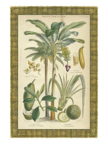 Palme in cornice di bambù II Stampa artistica