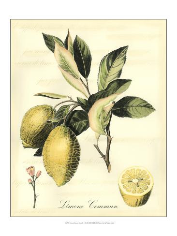 Printed Tuscan Fruits II Art Print