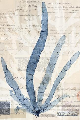 Seaweed Arrangement II Art Print