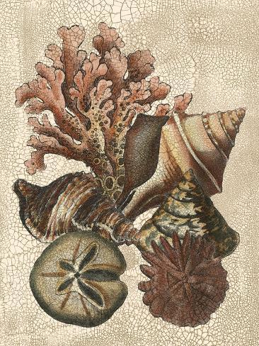 Shell and Coral on Cream I Art Print