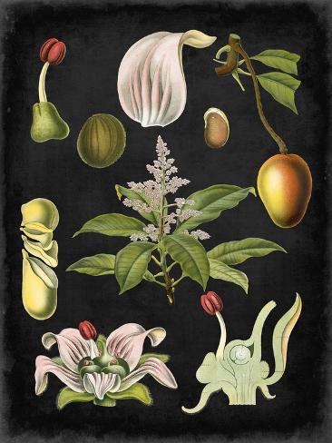 Study in Botany III Art Print
