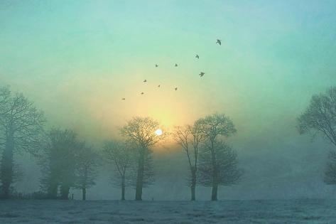 Frozen Stampa fotografica