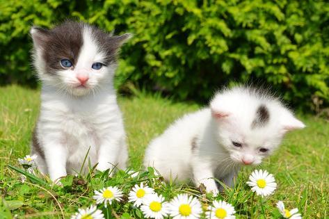 Small Cats in the Grass Photographic Print