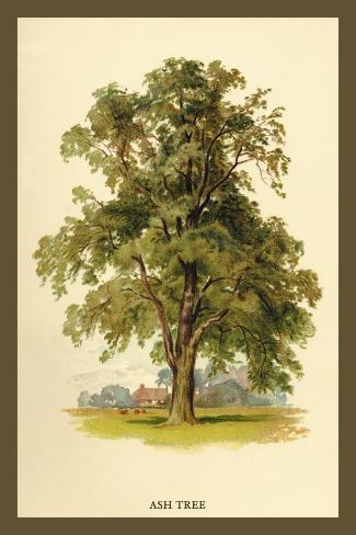 Ash Tree Decalcomania da muro