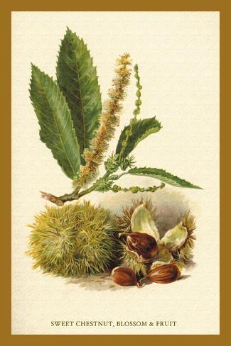 Sweet Chestnut, Blossom and Fruit Decalcomania da muro